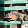 猫好きにはたまらない!見てるだけでも楽しい猫画像サイト「CatStock」