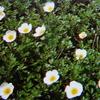 7 月29日誕生日の花と花言葉