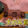 【Apex Legends】ワールズエッジの隠し要素の場所!マップ上に犬の写真がある?