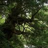【60】『森の中の海』宮 本 輝 著 上下巻