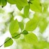 【心和む】「森と共に、歩む日々。」ブックレビュー~森林浴~森林セラピー~森の空気感を味わおう