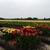 平地の春の花