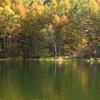 長野県の紅葉風景写真