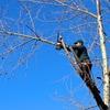 いつまで木登りできるか?庭木の強剪定