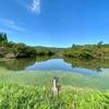 メグノマチ池(未確定)(石川県志賀)