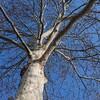 岩手県営体育館前の立派な樹