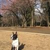 東京では都立高校入試