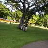 ハワイ旅行 ハートの木を見つけに行こう!!