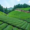 日本緑茶発祥の地、宇治田原町湯屋谷地区へ