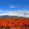 驚き!子供と遊びに行く秋の那須高原おススメスポット。