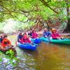 島旅で島を愛そう〜おすすめ石垣島旅行・西表島で人気の由布島観光&カヌーツアー体験