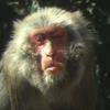 ニホンザルのスギ花粉症-発見物語