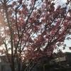 桜とか その3