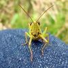 虫は宇宙生命体じゃないの?だってほらバルタン星人とか虫っぽいしって話