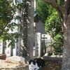 木陰の猫と社号碑