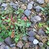 野草の季節