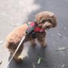 お散歩好きな怖がり犬