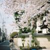 谷中の桜 #filmphotography