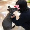 【韓国・ソウル】ミーアキャットカフェ
