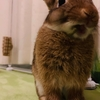 生後4カ月のウサギの体重測定♪(ちまき7月の体重)