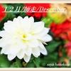 12月/師走/Decemberへ~街はXmas🎅🎄🎁✨
