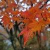 【国内観光】強羅公園と箱根美術館で紅葉鑑賞