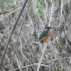 鳥撮り自慢