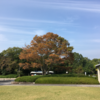 都市公園でドローン操縦練習