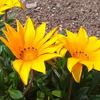 和泉市リサイクル環境センターの花