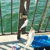 岡崎大樹寺店発 一流の使い心地で堤防釣りを楽しみませんか?