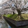 東京から車で2時間半!長野県にある、日本に2つしかない「五稜郭」、龍岡城の桜が満開だった!