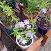 小さな苗木にも次々に花が・・・