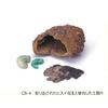 古代の宝石箱の謎 勾玉(まがたま)が褐鉄鉱に収められた深い意味 唐古・鍵遺跡
