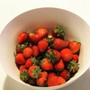【イチゴの育て方】コツさえ分かれば簡単、初心者にもオススメ