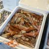 2020年11月24日 小浜漁港 お魚情報