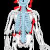 腰痛予防、対策に深部の腹部筋、筋トレ(ドローイング)