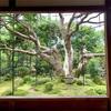 宝泉院(大原の名所)圧巻の五葉の松と感動の額縁の庭【青もみじ】