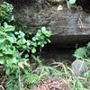 時の流れに埋もれてゆく 扇子畑のやぐら群(横須賀市)