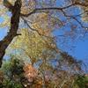 花粉の秋。