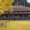 黄色い絨毯が美しい!喜多方市新宮熊野神社、長床の大イチョウ