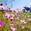E-Bike旅で見たい風景07/ビーナスライン