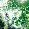 シルバーウィークに都内の庭園巡り