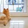 玄関ホールは、犬や猫が外へ勝手に飛び出さなように出入りを制限すること💡