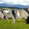 洗濯を干す工夫で衣類を長持ちさせる方法。洗濯干しグッズをご紹介!