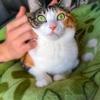 【愛猫日記】毎日アンヌさん#176