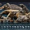 『IUCN レッドリスト 世界の絶滅危惧生物図鑑』は面白いけどかなり気が滅入る本だった