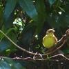 春の雑木林の鳥撮りは証拠写真量産