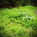 雑草のココロ見。