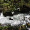 新緑の奥入瀬渓流散策