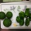 【子供用柚子胡椒】ピーマン胡椒を作ってみた